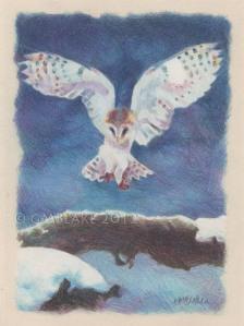 Owl, Alighting